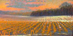 Rick Stevens Cornfileds In February