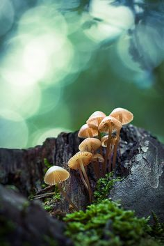 mushrooms | nature photography