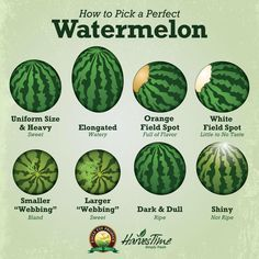 Do you get stressed every time you have to choose a watermelon from the bunch at your grocery store? We get a lot of questions about how to pick a melon that is ripe and sweet. Here are a few tips for how you can pick the perfect watermelon every time! Food Facts, Useful Life Hacks, Awesome Life Hacks, Simple Life Hacks, Fruits And Veggies, Vegetables, Good To Know, Just In Case, Helpful Hints