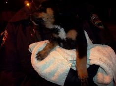 Police looking for person responsible for death of puppy thrown into dumpster