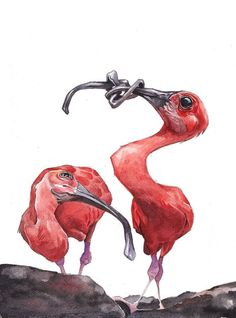 """Scarlet Ibis""...Watercolor Painting 11"" x 14"" Price includes shipping g and handling in the U.S. only Shipping outside of the U.S.? Please email us and we will get the lowest cost for the vest way av"