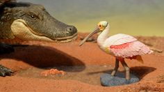 Roseate Spoonbill (Safari Ltd - Wild Safari Wildlife) - Animal Toy Forum
