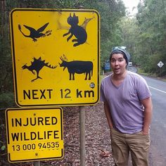 Where The Wild Things Are.| Somebody got a little artistic and turned all the Aussie animals into prehistoric dinosaurs & monsters on this Wildlife Caution Sign. Had to stop and take a photo considering I did a double take while driving past! Too funny! #Australia #visitGOR #GOR #GreatOceanRoad by reptdoto