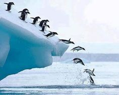 """These penguins are about to do a """"SPLASHdance"""".  giggles ~ C'mon now and bust a move!  lol ~ dwb"""