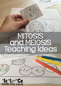 How I Teach Mitosis and Meiosis in High School Biology Wissenschaft mit Frau Lau hat tolle Ideen und Science Cells, Science Biology, Science Education, Life Science, Ap Biology, Physical Science, Earth Science, Forensic Science, Higher Education