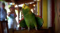 Zihuatenejo Mexico is a charming holiday destination by tourist from all over the world. Once a little fishing village on a scenic cove, Zihuatenejo is now a. Fishing Villages, Parrot, Dancing, Mexico, Pictures, Animals, Parrot Bird, Photos, Dance