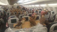 เหยี่ยว 80 ตัวขึ้นเครื่องไปยังเมืองเจดดาห์