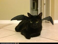 Toothless - cat costume - how to train a dragon