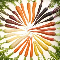 I never realized the number of colors for carrots until I was looking at seed books - A Rainbow of Carrots - The wonderful thing about gardening is you get to have fun with what you grow, experiment with plants, find the seeds for vegetables you normally can't find in the grocery store and run with it. Carrots are extremely easy to grow vegetables.