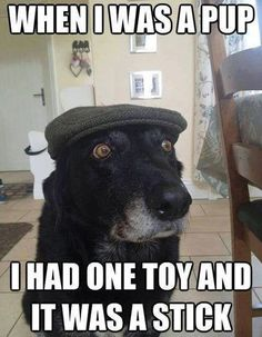 Need a Laugh? These Animal Memes Should Do the Trick! - Funny Dog Quotes - Back in My Day: Kids these days have it so easy. The post Need a Laugh? These Animal Memes Should Do the Trick! appeared first on Gag Dad. Funny Dog Memes, Funny Captions, Funny Animal Memes, Funny Animal Pictures, Cute Funny Animals, Funny Cute, Dog Pictures, Funny Dogs, Dog Humor
