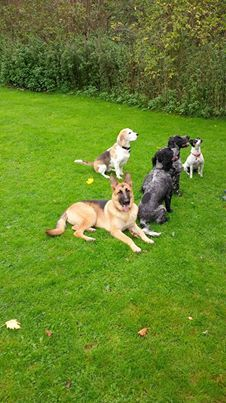 K9 Support Services for all your dog needs from training, home boarding and walking service, dog behaviour problems to security guard dog services. for more information  info@k9supportservices.com Norwich and surrounding areas.
