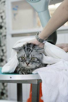 hahahahaha poor kitty u need your bath