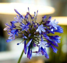 Bij BloomZ vind je een uiteenlopend assortiment dagverse bloemen - BloomZ bloemen Rotterdam