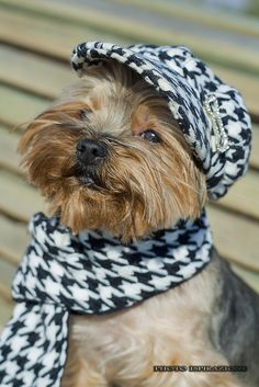 Dog Fashion~he knows he's handsome!