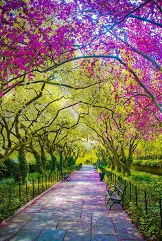 Spring, Central Park, New York City.