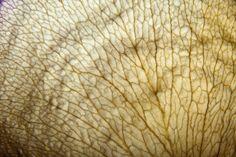 Inspiration for the new collection: Next Nature Custom Carpet, Carpet Trends, Carpet Design, Nature, Pattern, Inspiration, Collection, Biblical Inspiration, Naturaleza