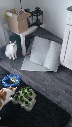 It wasn't me