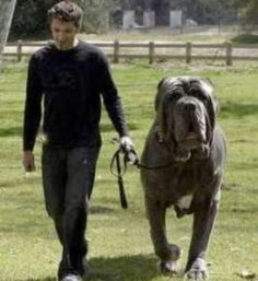 That's one LARGE dog!