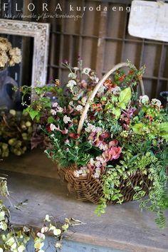 フローラのガーデニング・園芸作業日記-寄せ植え ジュズサンゴ ミセバヤ マム
