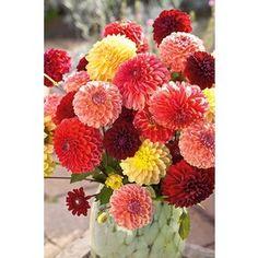 Rakhi with Flowers - Buy Rakhi with Flowers Online Buy Rakhi Online, Rakhi Gifts, Planting Bulbs, Flowers Online, Piece Of Me, Spring Garden, Carnations, Flower Beds, Fresh Flowers