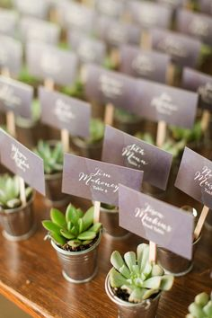 Succulent favors | Katelyn James