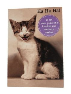 Card Invitation Design Ideas Laughing Cat Two Birthday DJ Pussy