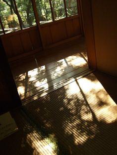 代官山はヒルサイドテラスのすぐ脇に、古い日本家屋が建っている。重要文化財「旧朝倉家住宅」。ちょっと縁側に腰かけて、ほっと和むのにちょうど良い。影が映すは森の木々...