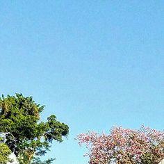 Palácio de Cristal 💎👑💎 Part 9/9 🌐 Petrópolis (RJ) 🗺 Brasil 📷 @reportertorres ⏩ Samsung Galaxy S7  #palace #petropolis #travel #tourism #crystals #photography #amazing #wonderful #riointerior #instatravel #photographer #travelgram #photo #mansion #brasil #vacation #palacio #world #weekend #photograph #lifestyle #instagram #city #dayoff #rj #brazil #southamerica #luxurylife #vacation #luxury