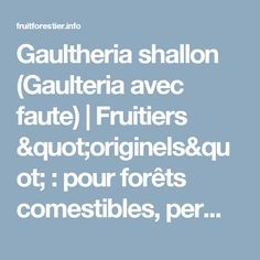"""Gaultheria shallon (Gaulteria avec faute)   Fruitiers """"originels"""" : pour forêts comestibles, permaculture. Graines """"fidèles"""". Comparatifs, fruits doux rustiques"""