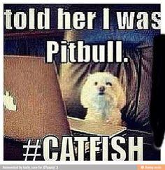 #catfish hahaha