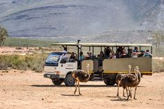 ILIOS Travel / Tours Cape Town Full Day Safari at Aquila Tour. R2540