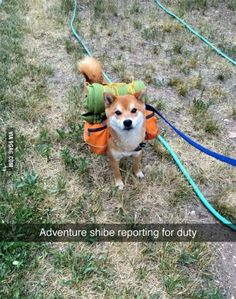 Doge ready for adventure!