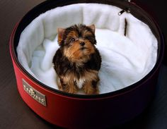 Sleepypod has introduced White Ultra Plush Bedding, an optional accessory for Sleepypod mobile pet beds.