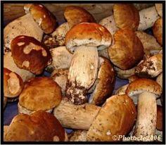 cueillette des champignons