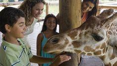 12 Books for Animal-Loving Kids