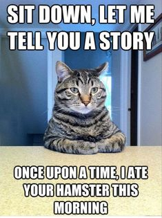"""Sit down and let me tell you a story once upon a time I ate your hamster this morning"" cat meme"