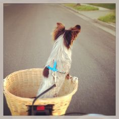 My little Booger on a bike ride!
