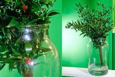 Green Inspiration #Ruscus www.adomex.nl Green powers!