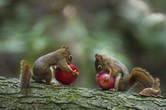 Mine is larger by Andre Villeneuve on 500px