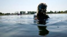 Natalie Baga, of Kent, takes a dip in Soap Lake to wash off the mud that is believed to have therapeutic properties. Soap Lake, Lake Photos, Pacific Northwest, North West, Mud, Seattle, Politics, Entertaining, Photo And Video