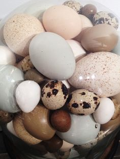 Rare Victorian Collection Of Different Bird's Eggs, encased in a glass dome