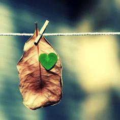 autumn, colors, effect, fashion, heart