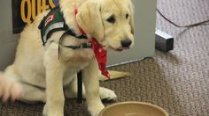 "Enjoy video from HI's ""Paws & Breathe"" exam program with a Canine Assistants pup."