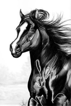 Shading of a horse in Bic Pen by Cheryl Poland Black Pen Sketches, Black Pen Drawing, Art Drawings Sketches Simple, Horse Drawings, Car Drawings, Animal Drawings, Horse Sketch, Eyes Wallpaper, Bic Pens