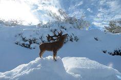 Red Deer, Outdoor, Outdoors, Outdoor Games, Outdoor Living, Deer