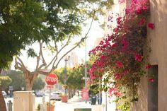 Little Italy, San Diego // my SoCal'd life, a lifestyle blog