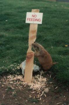Verboden  te voederen