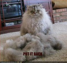 how i feel about my haircut sometimes lol.