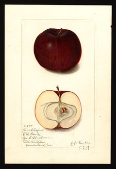 Apple Science, From American Beauty to Zestar - Science Friday Bee Activities, Milk The Cow, Apple Varieties, Mother Jones, Old Book Pages, Art Clipart, Senior Girls, Picture Collection, Girl Scouts