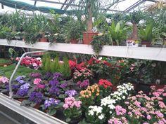 See 1 photo from 7 visitors to Kulla. Four Square, Garden, Plants, Garten, Gardening, Plant, Outdoor, Gardens, Yard